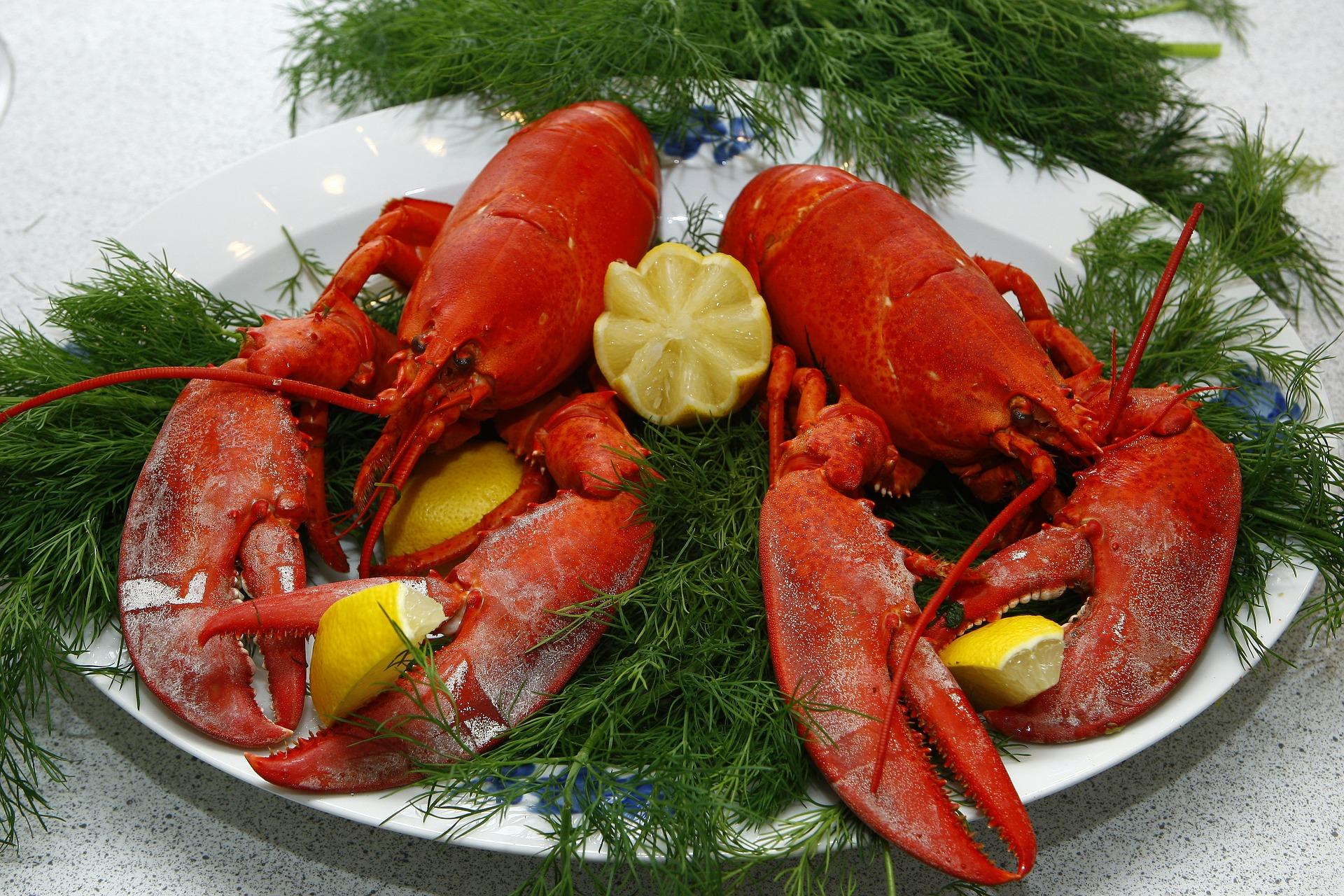 lobster-1608440_1920.jpg